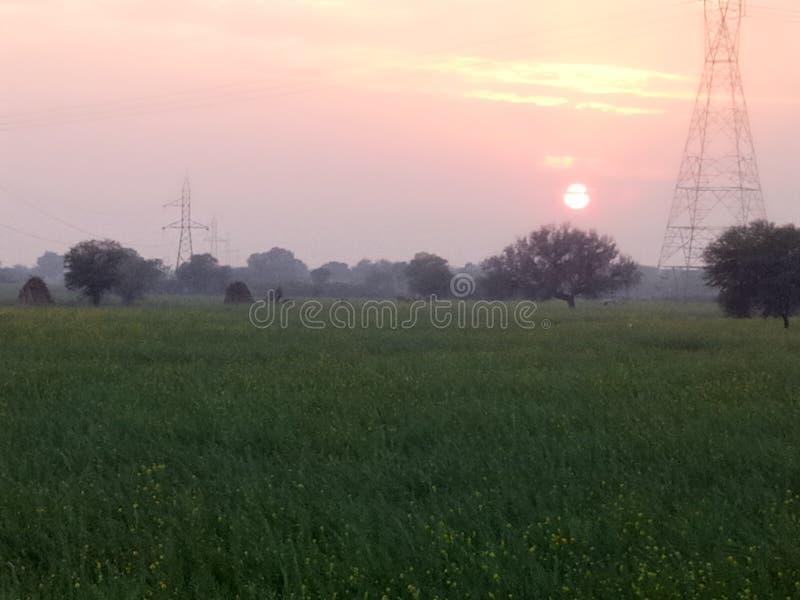 Golden sun set through the green fields stock photos