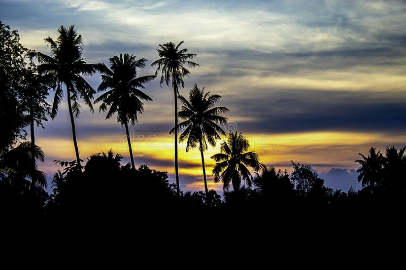 Sunset the evening light through the clouds and coconut trees.  royalty free stock photography