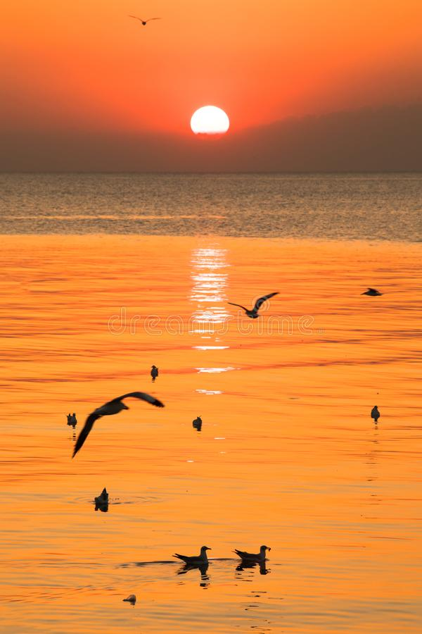 Sunset or evening time with blue sky at sea or ocean with seagull bird flying at Bang poo, Samutprakan, Thailand. Landscape photo royalty free stock photo
