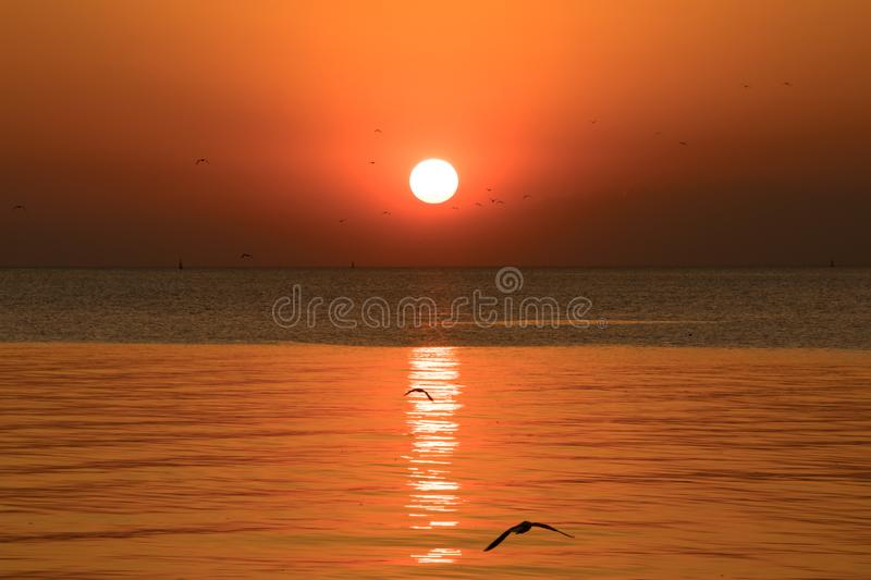 Sunset or evening time with golden sky at sea or ocean and seagull bird flying at Bang poo, Samutprakan, Thailand. stock photography
