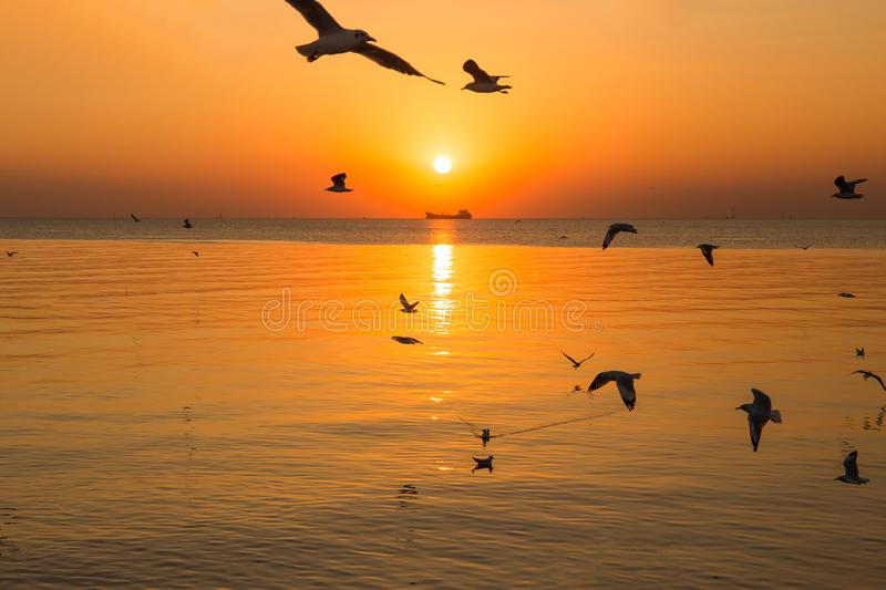 Sunset or evening time with golden sky at sea or ocean and seagull bird flying at Bang poo, Samutprakan, Thailand. Nature background stock image