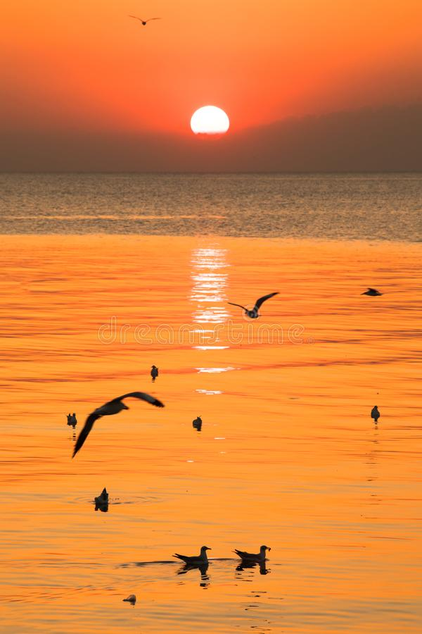Sunset or evening time with golden sky at sea or ocean and seagull bird flying at Bang poo, Samutprakan, Thailand. Nature background royalty free stock photography