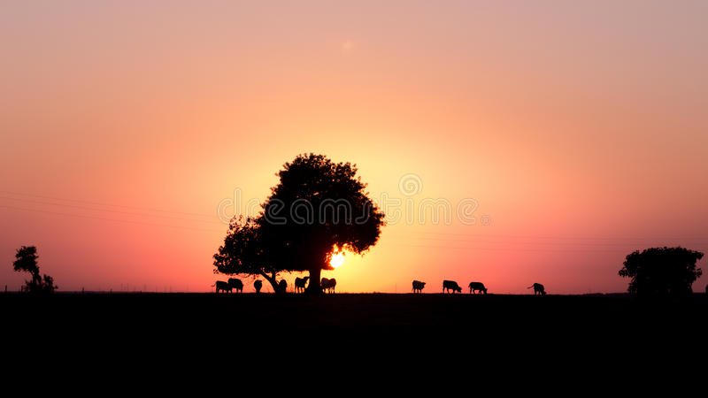 Sunset in the farm stock photos