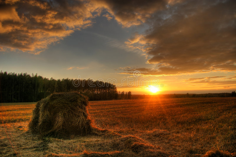 Sunset on the field royalty free stock image
