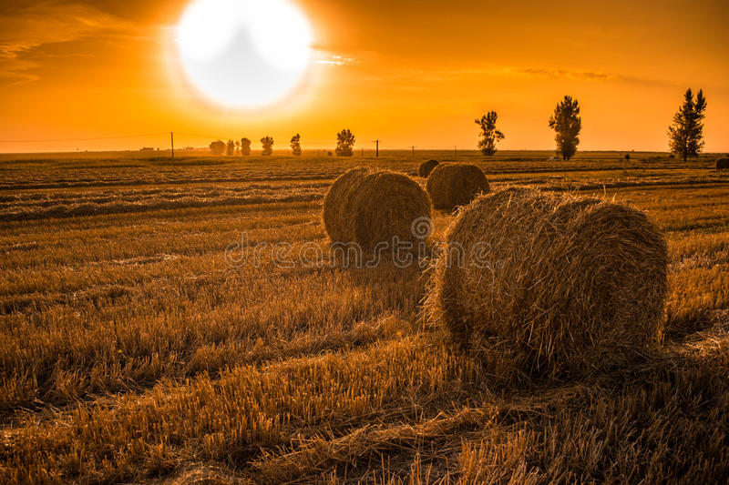 Sunset field with hay bales stock photography