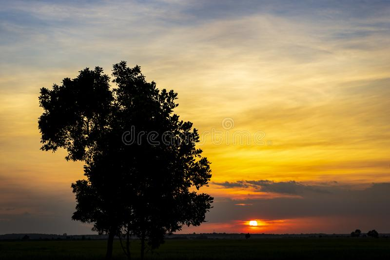 Sunset on the field royalty free stock photos