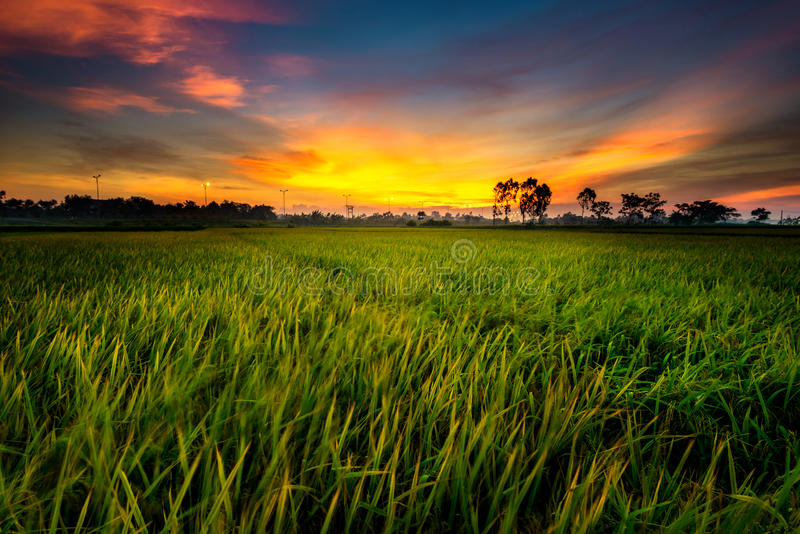 Sunset in the field royalty free stock photography
