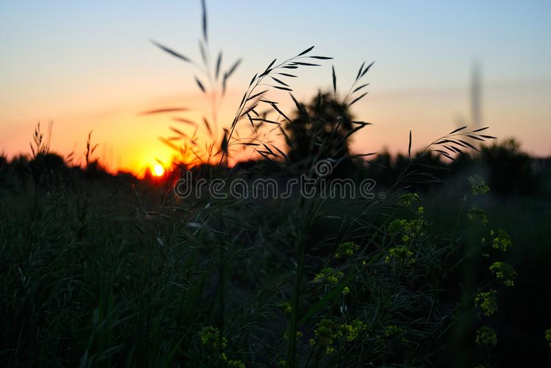 Sunset in the field. Sunset in field on a summer eveningn royalty free stock images
