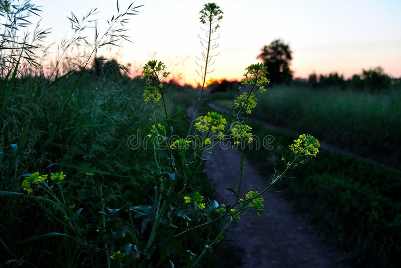 Sunset in the field. Sunset in field on a summer eveningn stock images