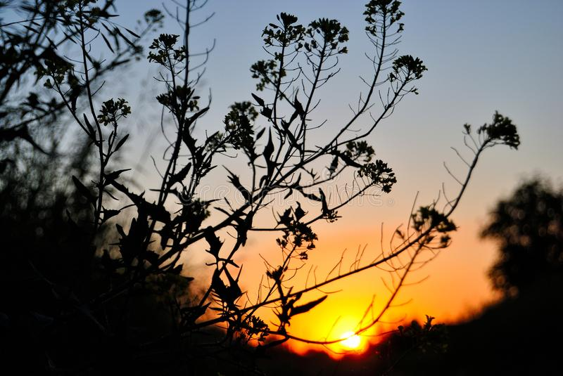 Sunset in the field. Sunset in field on a summer eveningn royalty free stock photography