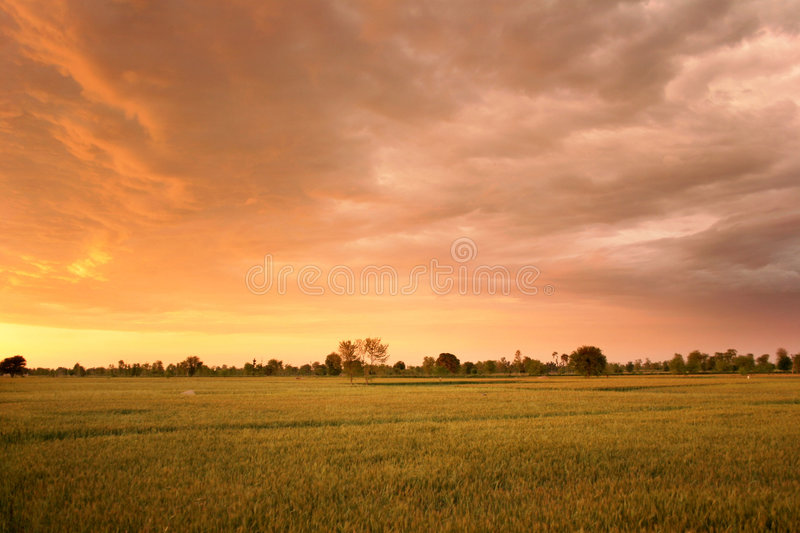 Sunset among fileds stock images