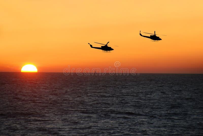Sunset flight stock images