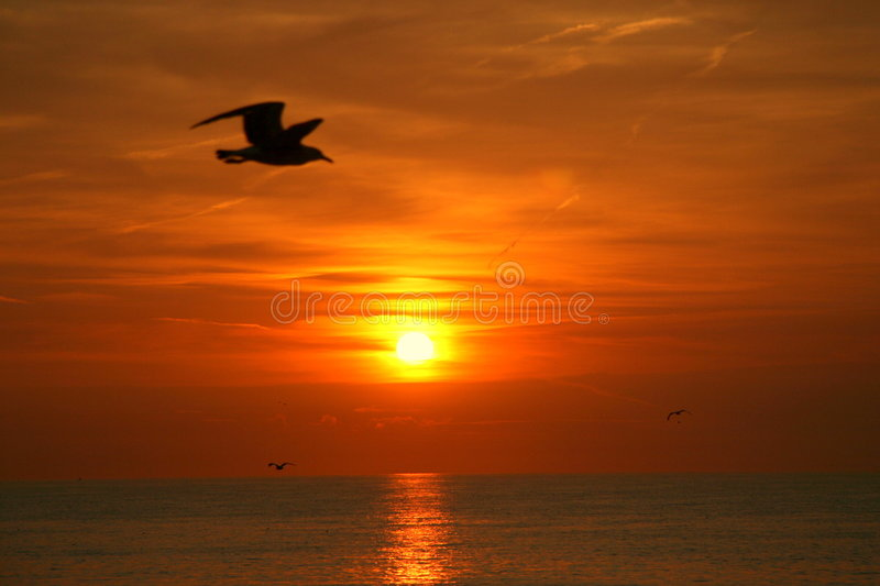 Sunset flight stock photography