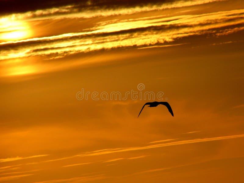 Download Sunset Flight Royalty Free Stock Photo - Image: 32835515