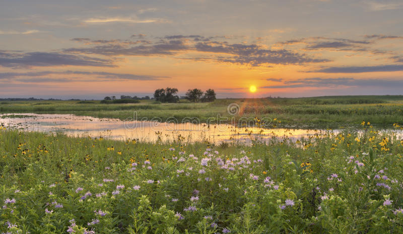 Download Sunset at Flower Field stock image. Image of field, yellow - 23419409