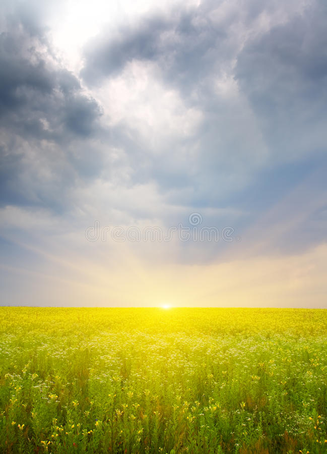 Sunset on flower meadow. stock photography