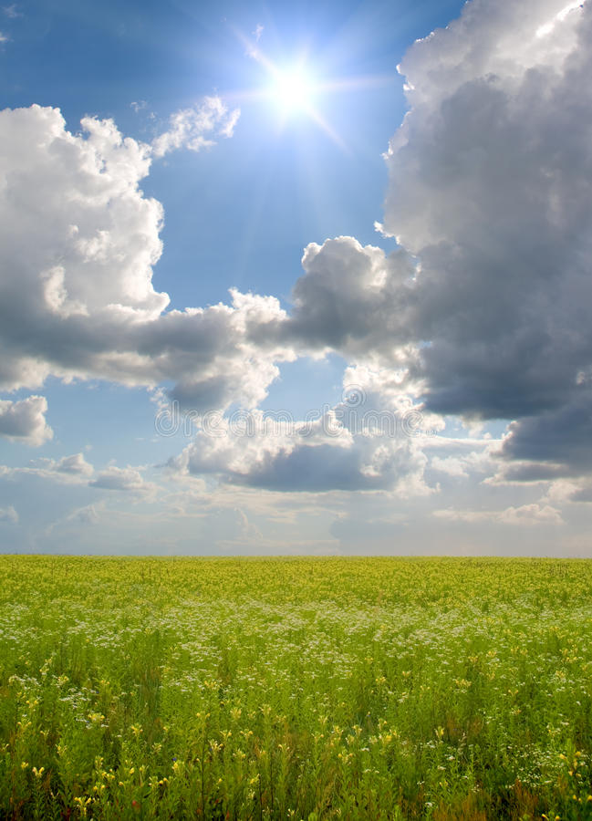 Download Sunset On Flower Meadow. Stock Image - Image: 20796351
