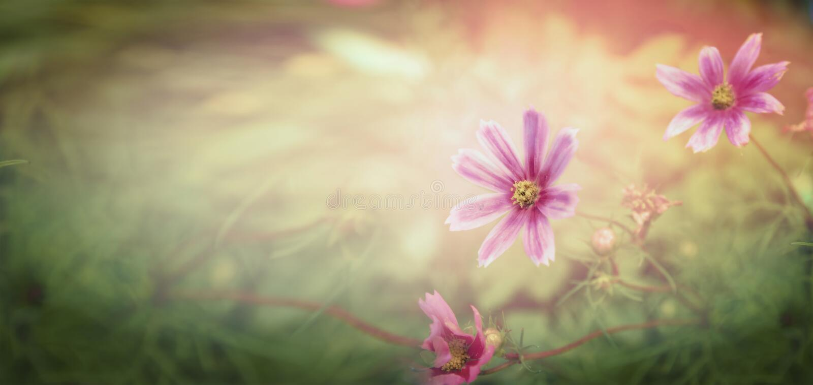 Sunset flowers on nature background, banner. For website stock photo