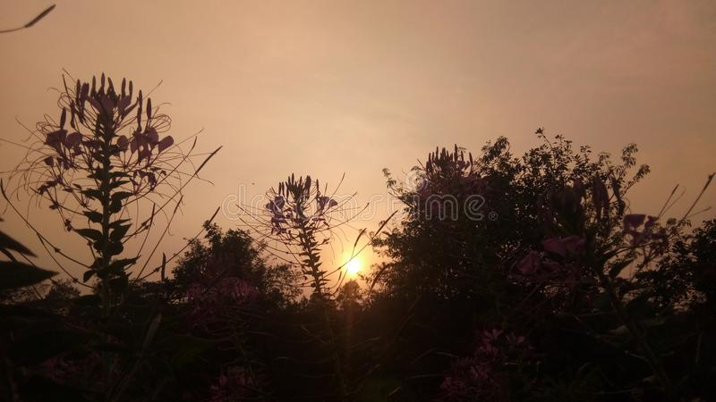 Sunset with flowers stock photography
