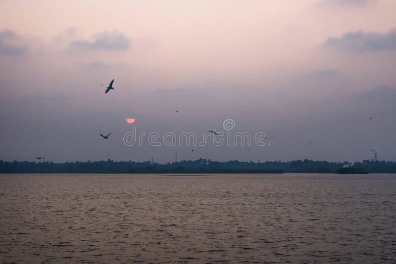 Sunset with flying birds at the Ashtamudi Lake, Kollam, Kerala, India. Purple sunset with flying birds at the Ashtamudi Lake, Kollam, Kerala, India stock photo