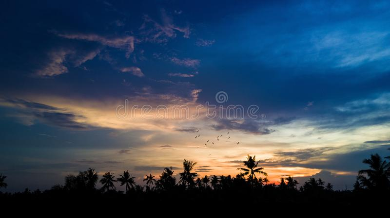 Sunset golden hour with beautiful sky and palm trees. Sunset with flying birds and palm tree silhouette at the village stock photos