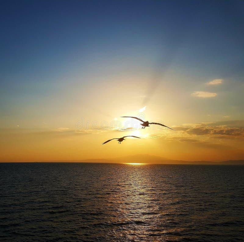 Sunset flying birds. Sea Sunset flying birds royalty free stock photo