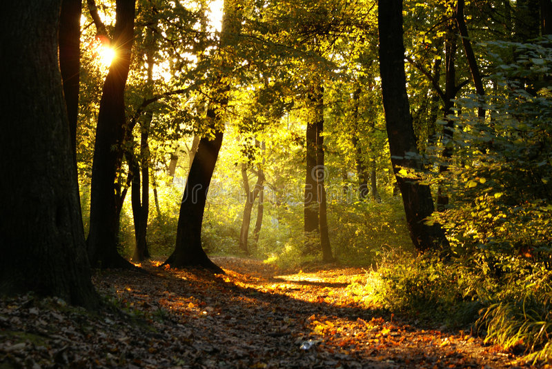 Download Sunset in a forest stock image. Image of beautiful, colorful - 3290899