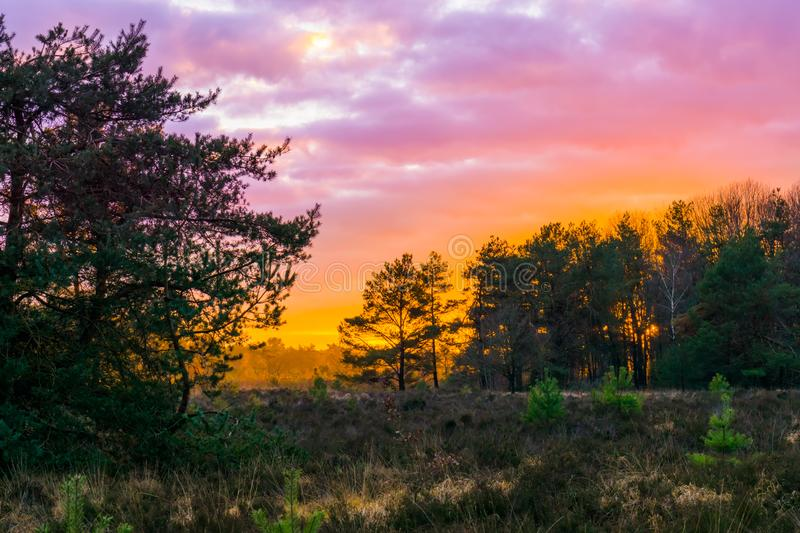 Sunset in a forest heather landscape with polar stratospheric clouds, a rare weather phenomenon that colors the sky pink stock photos
