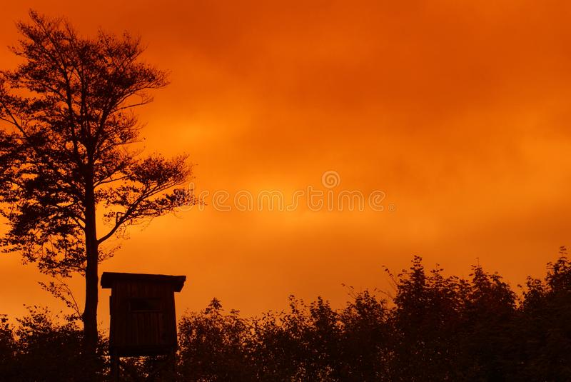 Download Sunset At The Forest's Edge ... Stock Image - Image of forest, silhouette: 34574809