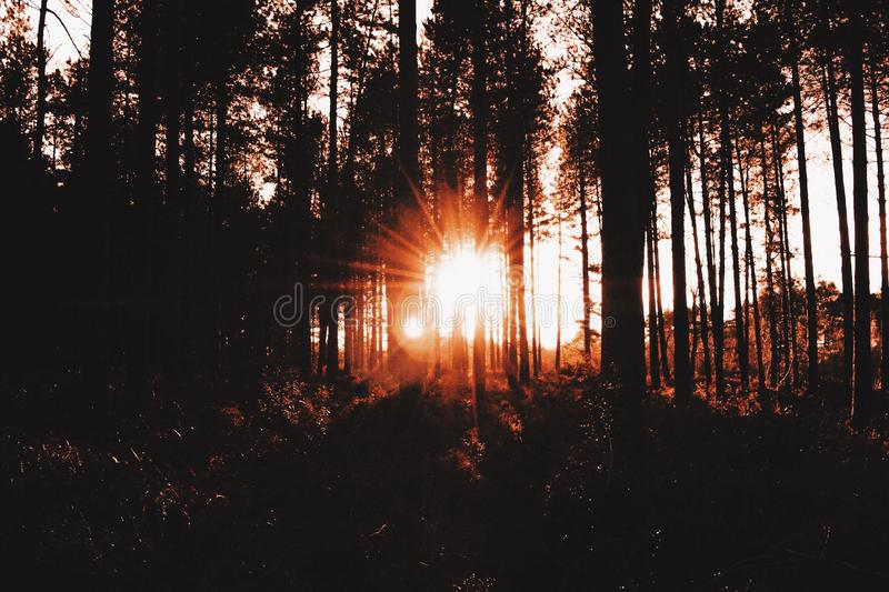 Sunset forest. stock image