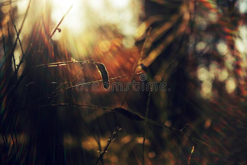 Sunset in the forrest. Photo with old lens stock photos
