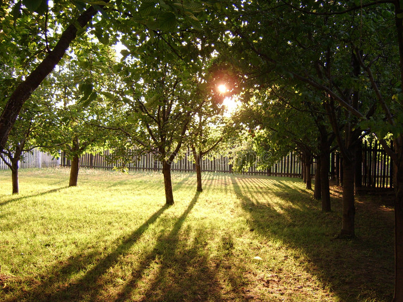 Sunset in the fruit garden royalty free stock photography
