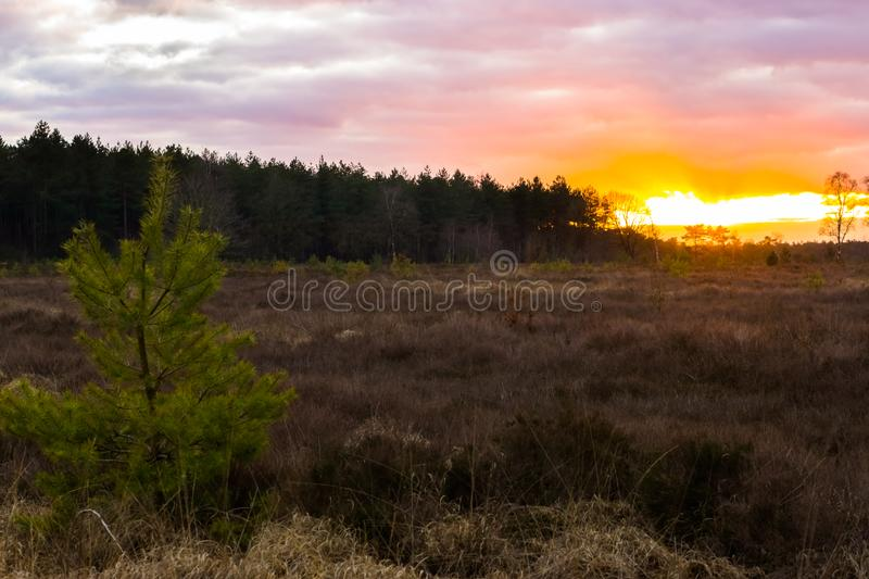 Sunset giving a colorful sky and clouds in a heather landscape with view on the forest royalty free stock photo