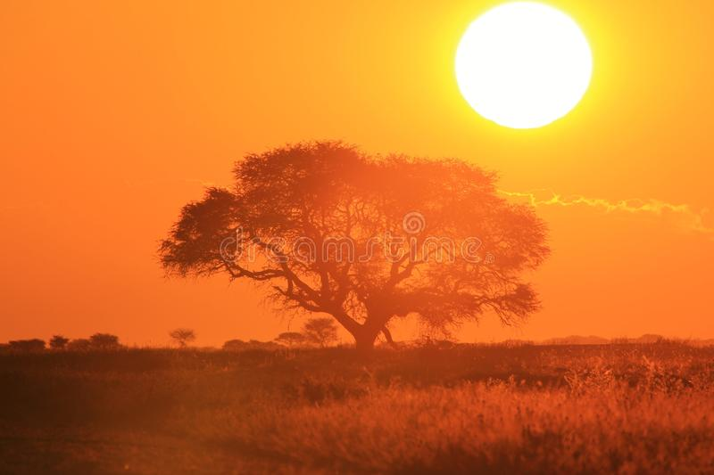 Sunset Gold - African Nature and Beauty Background royalty free stock image