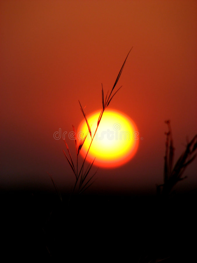 Sunset In The Grass Royalty Free Stock Photos