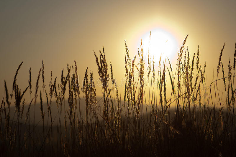 Download Sunset Grass Stock Image - Image: 22626201