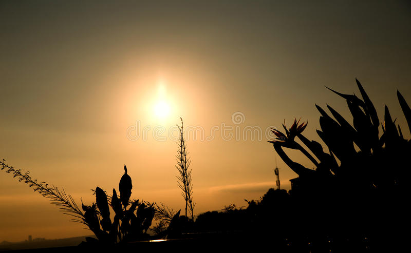 Sunset/grass flower with sunset background. Photo of sunset/grass flower with sunset background stock image