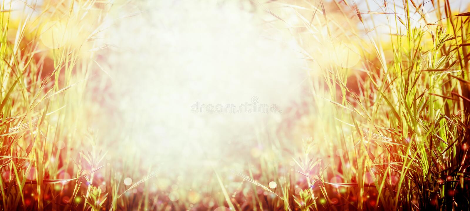 Sunset grass nature background. Summer or autumn meadow. Banner stock photo