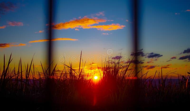 Sunset through grass stock image