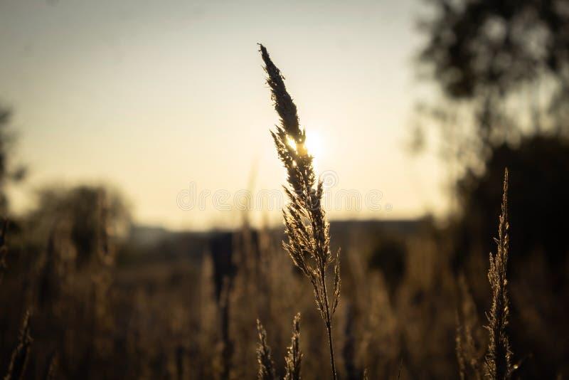 Sunset. Grass on sunlight background stock photos