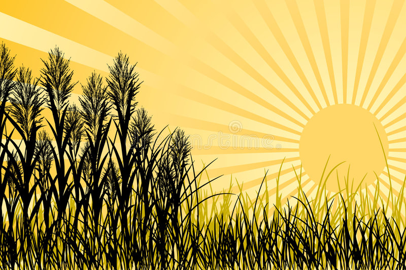 Download Sunset and grass, vector stock vector. Image of beam, grass - 2178038
