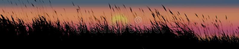 Sunset grasses stock image