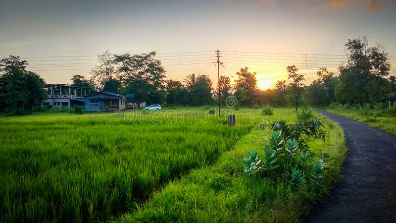 Sunset at Green Landscape Nature. Landscape in green nature. , grass, greenary, natural, cloud, sky, blue, trees, , clouds, skyand, skyandclouds, electric stock images