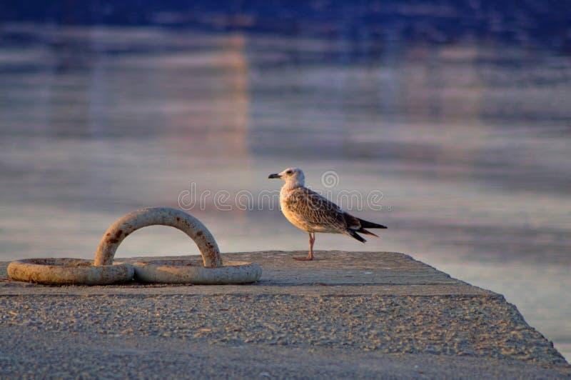 Sunset and gull stock photo