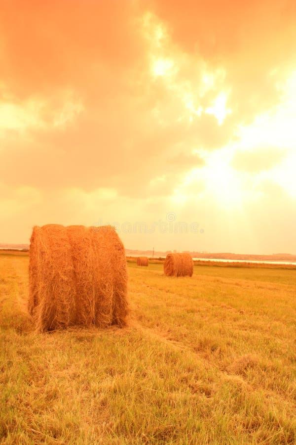 Free Sunset Haybales Royalty Free Stock Photography - 6203547