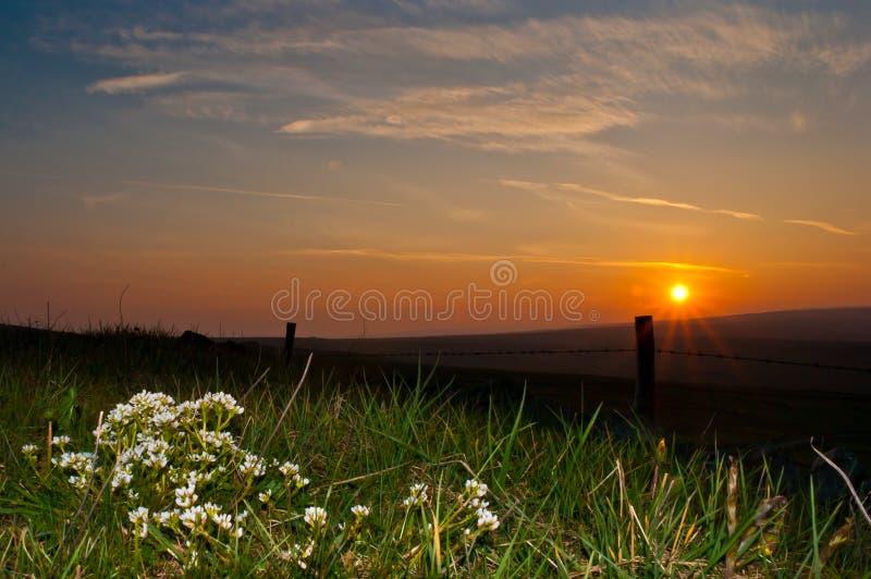 Sunset Hebden Yorkshire. UK flowers roadside stock image