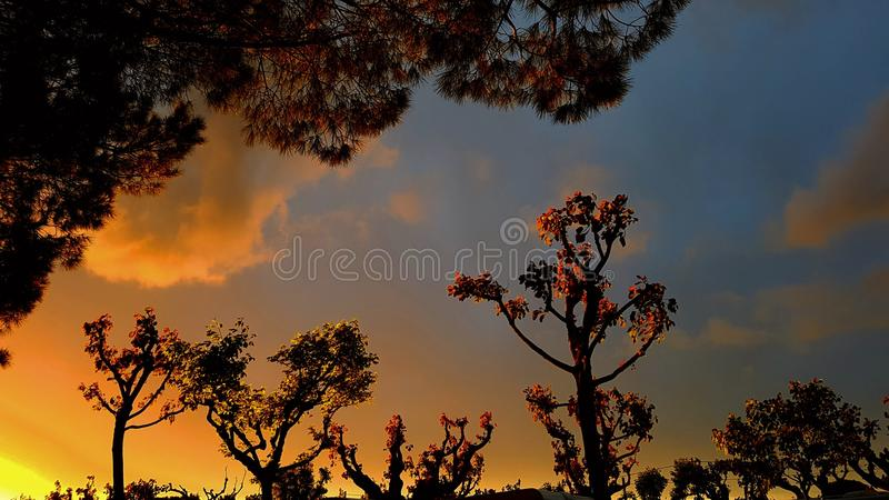 Sunset hedgerow royalty free stock photography
