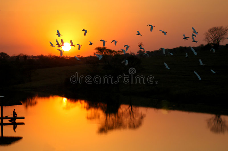 Download Sunset and herons stock photo. Image of birds, landscape - 593056