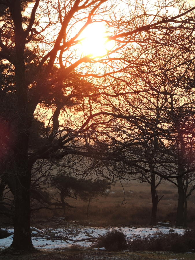 Sunset in Hilversum, the Netherlands. On a winter day. The meadow full of heather stock photos