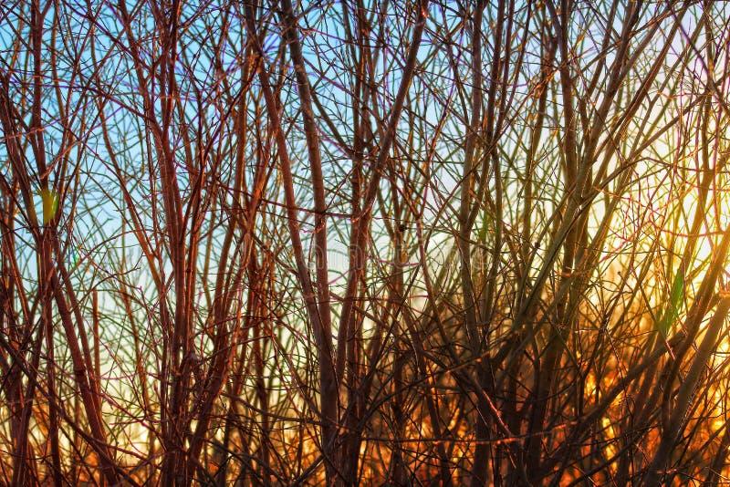 Sunset Horicon Marsh. Walking through the Horicon Marsh at Sunset royalty free stock photos
